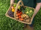 Agricultura sostenible: acciones puedes aplicar finca