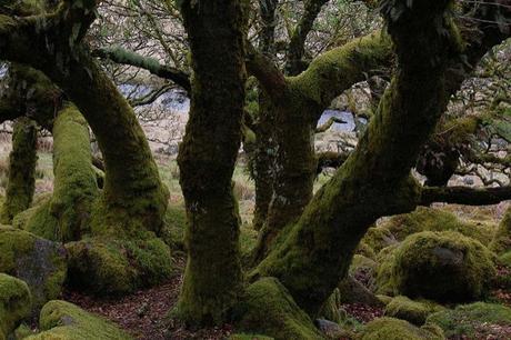 Bosque Hoia-Baciu, triángulo de las bermudas de Transilvania