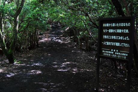 ¿Conoces Aokigahara? bosque de los suicidios, historia