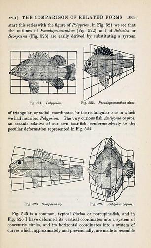 El dodecaedro y D'Arcy Thompson en Dundee