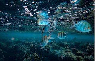 Los ojos de los peces nos permiten profundizar en la evolución de la conexión entre ojos y cerebro.