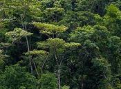 Ecosistemas (VII) Selvas Secas