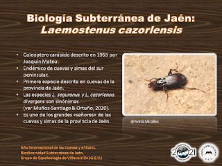 Biología Subterránea de Jaén (II)