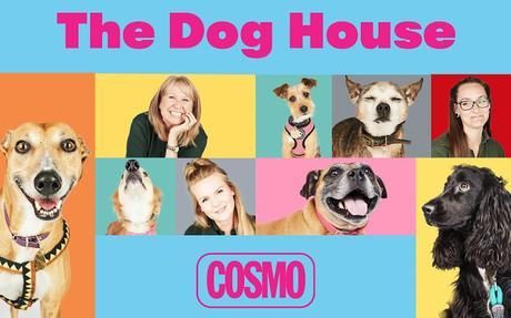 OPINIÓN DE THE DOG HOUSE
