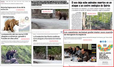 ¿Será el oso pardo el próximo candidato a especie cinegética en Asturias
