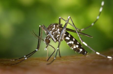 Getafe comienza la campaña de control de mosquitos y mosca negra en la ribera del Manzanares