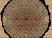 ¿Cuáles tipos cortes madera?