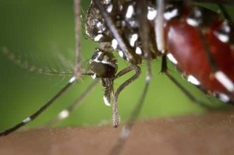 Murciélagos para acabar con el virus del Nilo