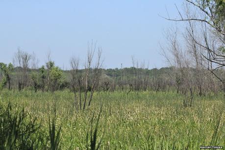 Parque Nacional Ciervo de los Pantanos (noviembre 2020)