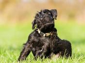 Consejos veterinarios para prevenir tratar alergias ambientales mascotas
