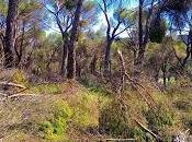 Nuestros bosques tras paso Filomena