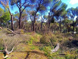 Nuestros bosques tras el paso de Filomena