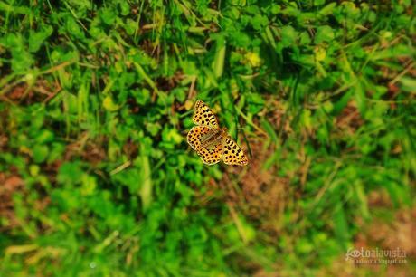 Mariposa flotante - Fotografía