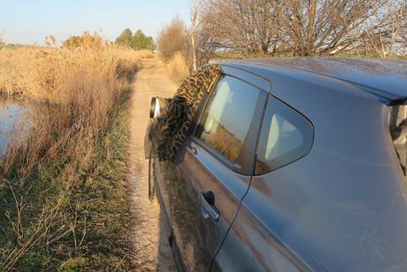 Cómo fotografiar fauna desde el coche
