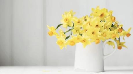 Cómo eliminar manchas de polen de tu hogar