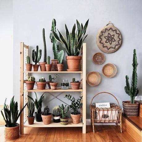 Decorar con cactus, las plantas con superpoderes_16