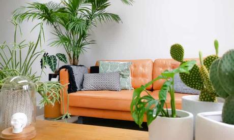 Decorar con cactus, las plantas con superpoderes_19