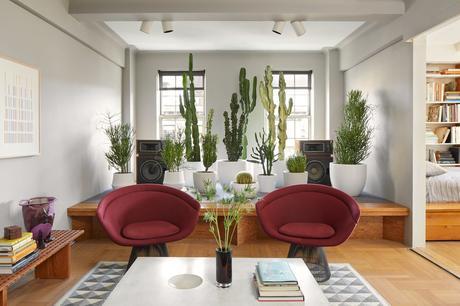 Decorar con cactus, las plantas con superpoderes