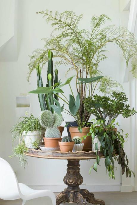Decorar con cactus, las plantas con superpoderes_8