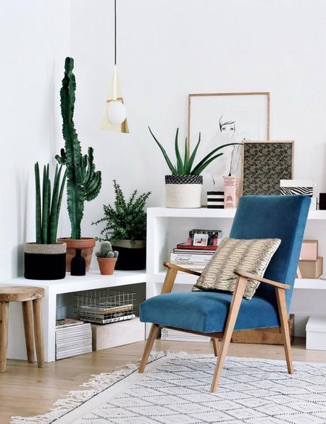 Decorar con cactus, las plantas con superpoderes_7