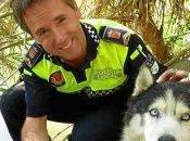 Alerta seguridad para rescate perro 'husky'.