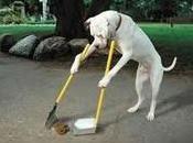 Cuidado dejes heces perro calle