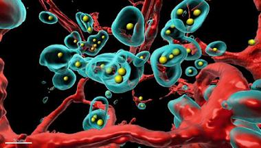 Técnica para hacer que las células cancerosas se autodestruyan