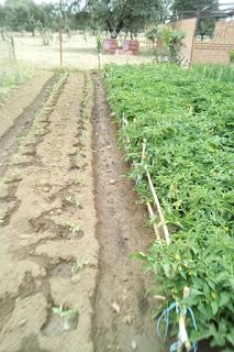 Huerto, recolección y nueva plantación