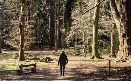 Escapada a New Forest