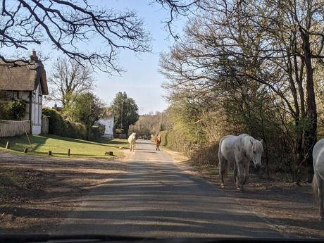 New Forest - Horses