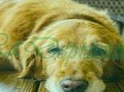 Depresión perros: Síntomas, Tratamientos Consejos