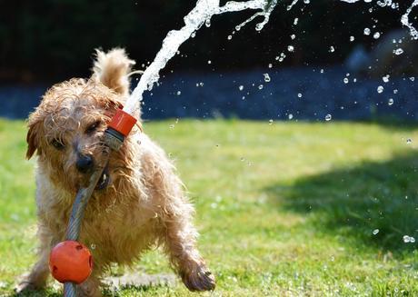Como alejar los perros del jardín: Cosas que funcionan 3