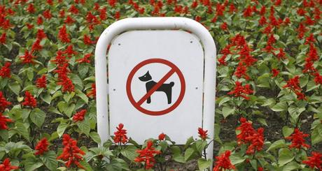 como alejar los perros del jardín