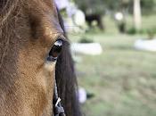 ojos caballos.