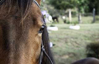 Los ojos de los caballos.