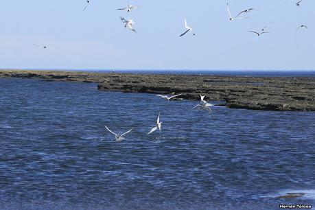 Ruta 1, playa y aves