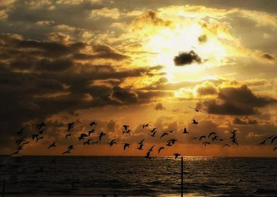 Del instante de destrucción salvaje de la vida, de lo más fugaz y pasajero, surgirá la creación artística maravillosa de la fotografía.