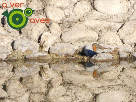 Con la espátula, la cigüeñuela y el cuervo: 131 especies con #AulasEnLosParques