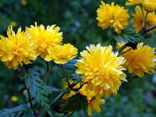 15 plantas repelentes de insectos