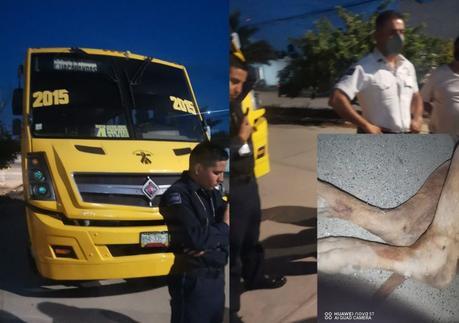 Camionero atropella a perro y policía lo deja en libertad