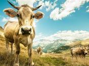 Miles hectáreas protegidas incendios verano gracias pastoreo ganado vacuno