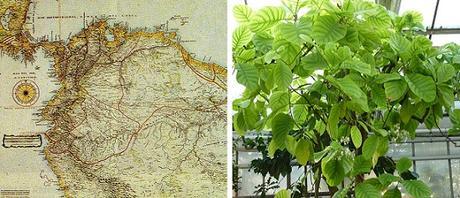 Mapa Virreinato Nueva Granada Planta Quina