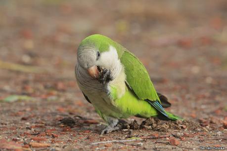 Aves en Palermo