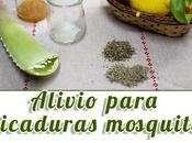 Alivia picaduras mosquitos estos remedios caseros