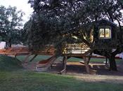 casa árbol enraizada. Rooted treehouse.
