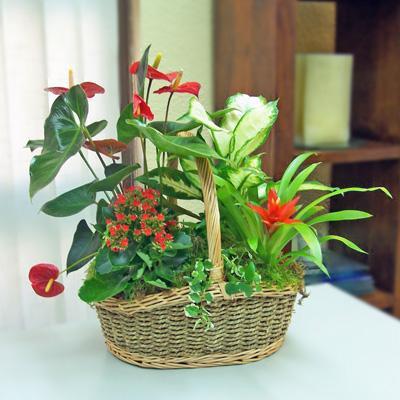 Decoraci n en plantas paperblog - Plantas de decoracion ...