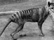 años desaparición tigre Tasmania