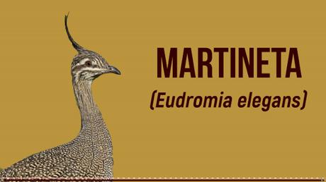 Nuevo vídeo: Martineta