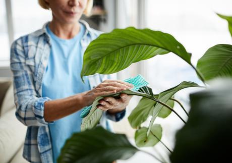 Cómo limpiar las hojas de nuestras plantas