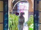 Palacio Condesa Lebrija (1): historia.